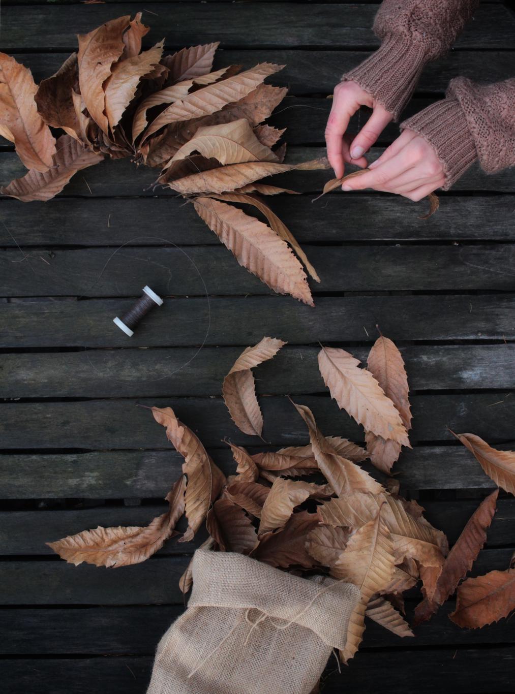 stella fiore di foglie di castagno